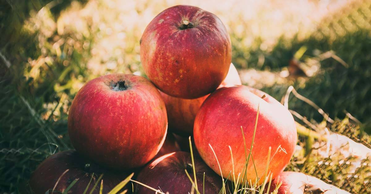 almák fűben, piramisba rendezve